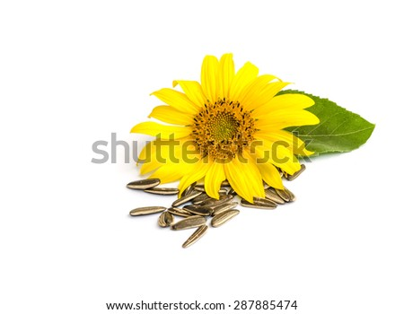 sunflower with seed  isolated on white background.