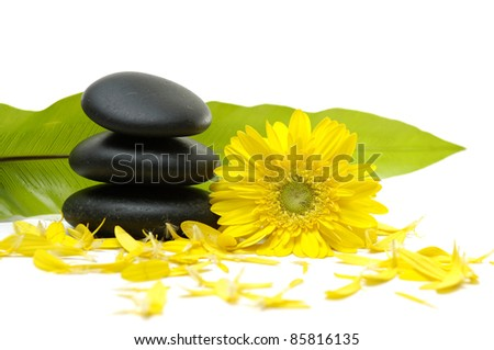 sunflower with stack stones in balance and green leaf - stock photo