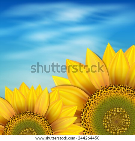 Sunflowers against the blue sky - stock photo