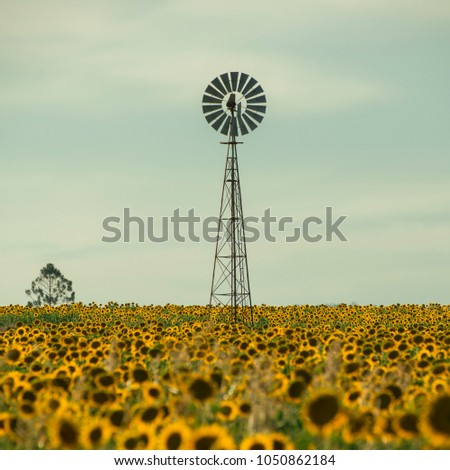 nobby design better homes and gardens submissions. Sunflowers amongst a field next to windmill in the afternoon Nobby  Toowoomba Region Stock Images Royalty Free Vectors Shutterstock