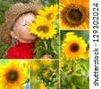 Sunflowers collage - stock photo