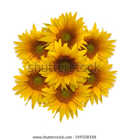 Sunflowers in a circle