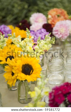 sunflowers in a mason jar - country style - stock photo