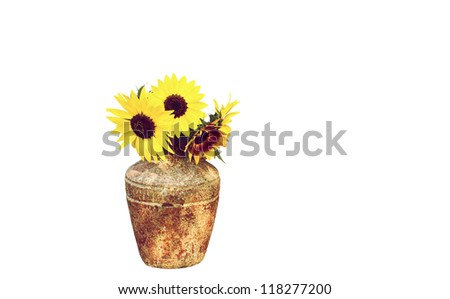 Sunflowers in a vase, isolated on white. - stock photo