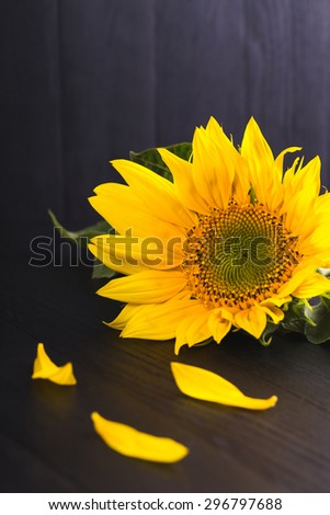 sunflowers on a black background