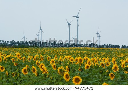 Sunflowers on blue sky background with windmill