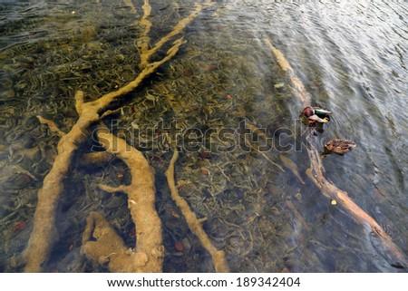 Sunken trees in  Plitvice National Park, Croatia, Europe - stock photo