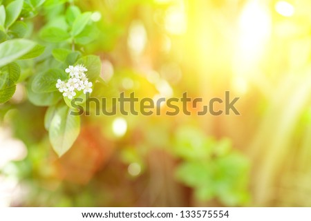 sunlight and flowers in spring - stock photo