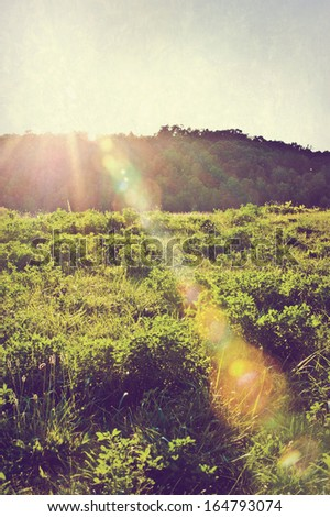 Sunlight and lens flare in a beautiful field. - stock photo