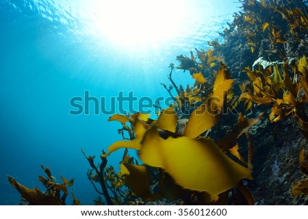 sunlight and seaweed - stock photo