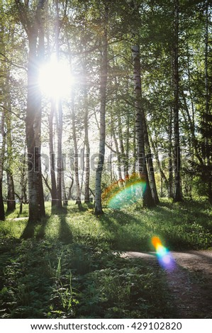 Sunlight and trees shades in beautiful spring forest, lens flare - stock photo