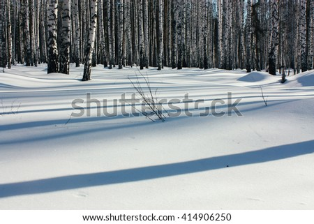 Sunlight Between the Trees in Winter Forest - stock photo