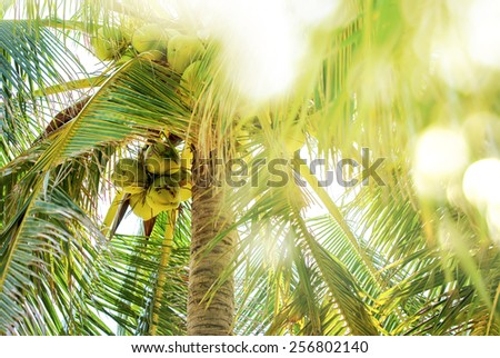 Sunlight bokeh across foliage of a tropical palm tree, nature background - stock photo