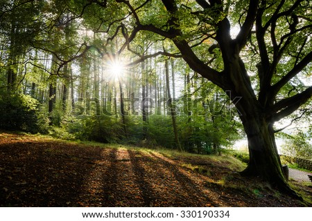 Sunlight breaking through a gap in the trees in a wooded area/woods/forest - stock photo