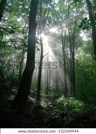 Sunlight breaks through the trees on the Appalachian Trail. - stock photo