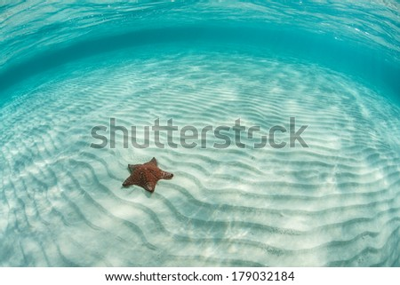 Sunlight cascades down on a West Indian seastar (Oreaster reticulates) that slowly crawls across a shallow Caribbean sand flat that has been rippled by waves and currents. - stock photo