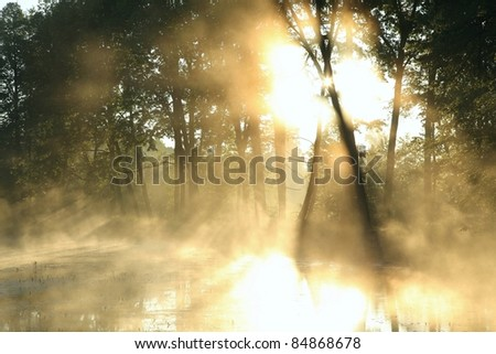 Sunlight enters misty deciduous forest before the arrival of autumn. - stock photo