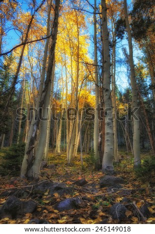 Sunlight filters through the aspens into a small meadow with autumn leafs and colors in the Unita's national forest in Utah USA./ Touch of God's Light - stock photo