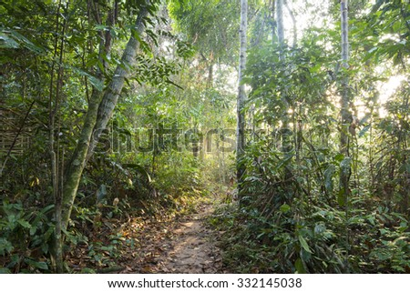 Sunlight filters through trees of jungle canopy on pathway in Amazon rainforest - stock photo