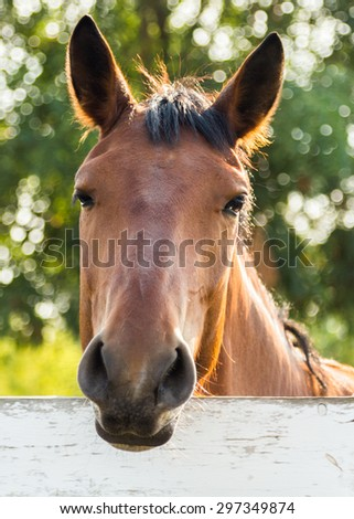 sunlight Horse head portrait outdoor - stock photo