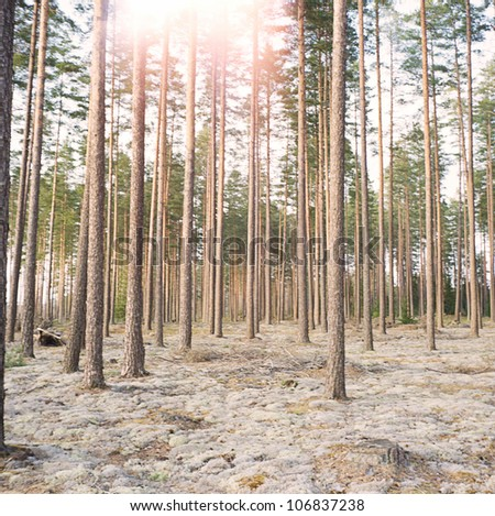Sunlight in a forest, Sweden. - stock photo