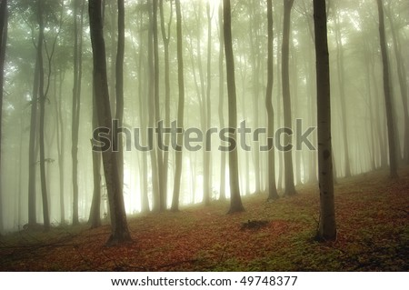 sunlight in a green forest with fog - stock photo
