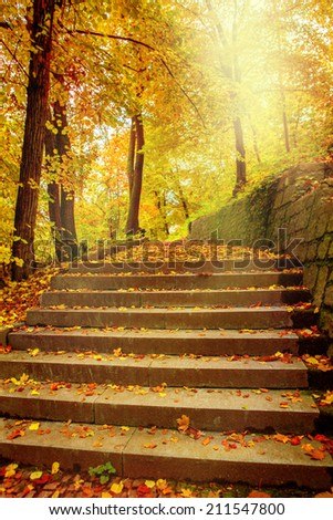 Sunlight in an autumnal park in Central Europe - stock photo