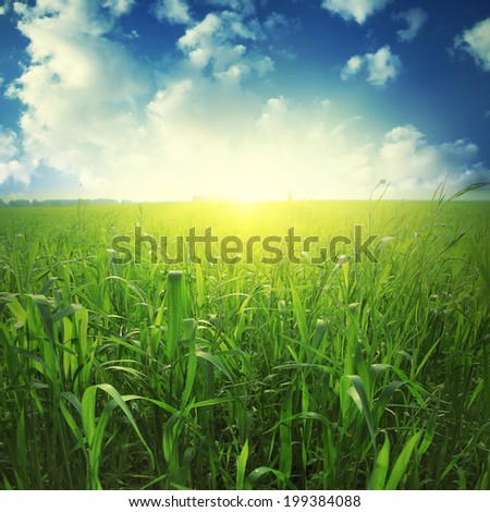 Sunlight in blue sky and green grass field. - stock photo