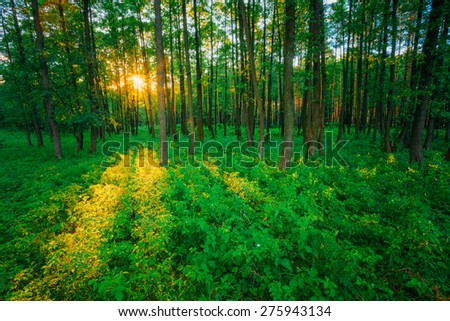 Sunlight In Forest, Summer Nature. Sunny Trees And Green Grass. Woods Background. Instant Toned Image - stock photo