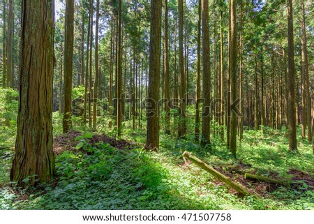 Sunlight in green forest. Untouched wild nature. Sunshine forest trees. Sun through vivid green forest. Peaceful nature in sunlight. Forest in light.