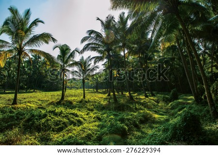 Sunlight in palm forest in India - stock photo