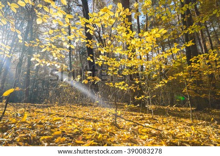 sunlight in the autumn forest, nature series - stock photo