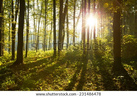 Sunlight in the forest - stock photo