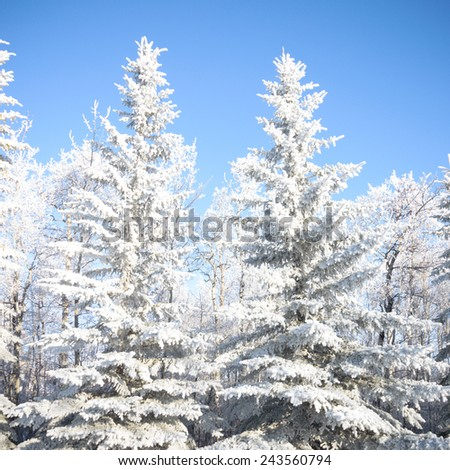 Sunlight in the frozen forest, nature series - stock photo