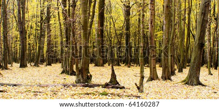 Sunlight in the green end yelow forest, autumn time