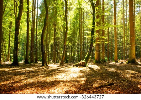 Sunlight in the green forest.Beautiful morning scene in the forest with sun rays and long shadows