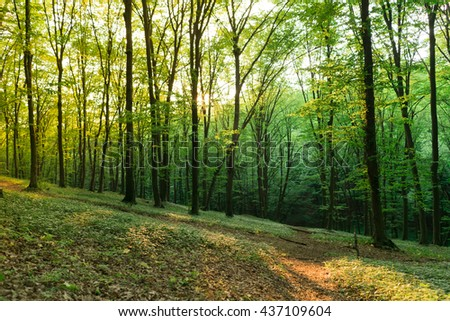 Sunlight in the green forest. Forest landscape. - stock photo