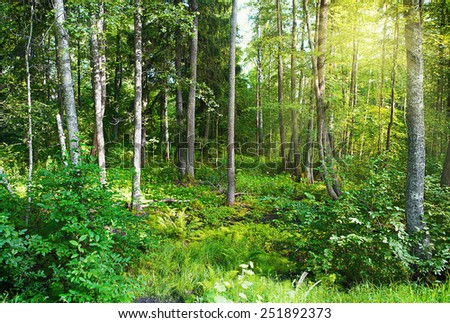 Sunlight in the green forest makes its way through the foliage
