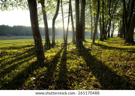 Sunlight in the green forest, spring time - stock photo