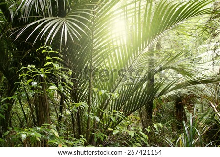 Sunlight in tropical jungle forest - stock photo