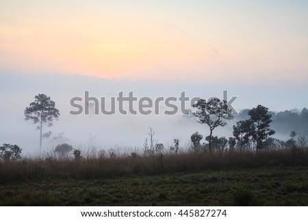 Sunlight morning in savanna grassland. - stock photo