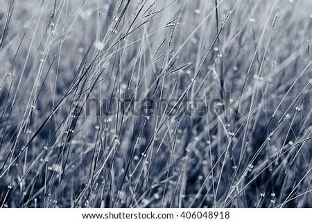sunlight on green grass  - stock photo