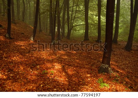 Sunlight on the dry fallen leaves in the mountain forest - stock photo