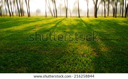 sunlight on the grass - stock photo