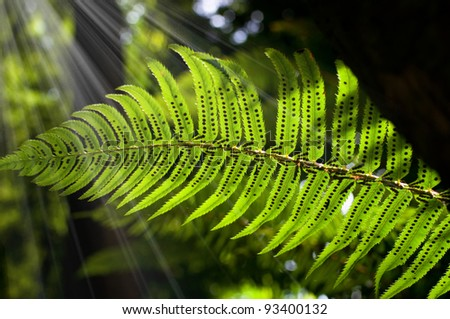 Sunlight rays pour through fern leaf - stock photo
