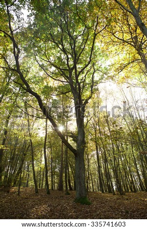 Sunlight shines through tree in autumn in Czech forest