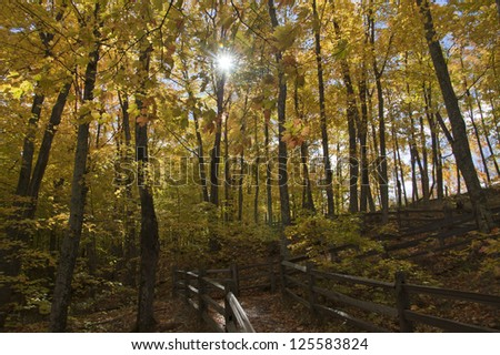 Sunlight shining on pathway through autumn forest - stock photo