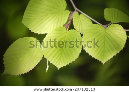 Sunlight Shining On The Leaves
