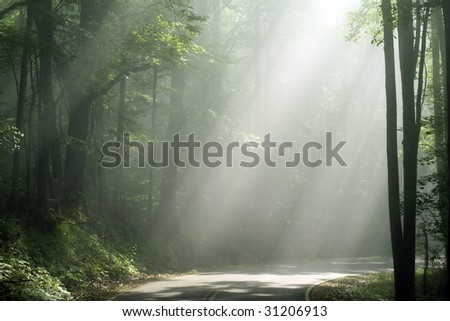 sunlight shining on the road