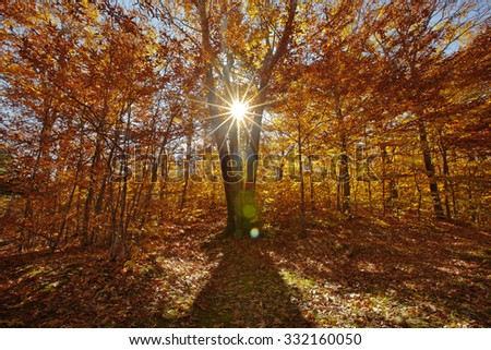Sunlight shinning through colorful autumn foliage. - stock photo